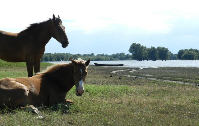 horses lying lake Beleu or Manta2