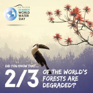 22 March 2018 - World Water Day: Nature for Water